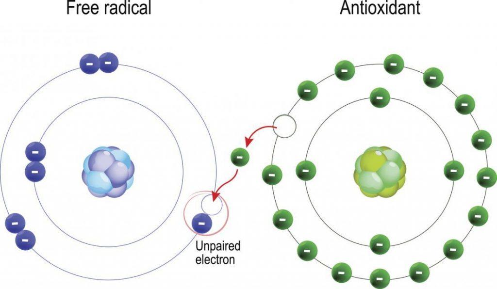 Los radicales libres son compuestos que pueden causar daño si sus niveles llegan a ser demasiado altos en tu cuerpo.