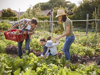"""Para vivir bien, hay que comer bien"""". La mejor forma de vivir bajo esta regla y mejorar tu calidad de vida es teniendo un huerto orgánico en casa.Tener"""